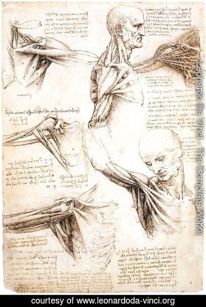 Leonardo Da Vinci - Anatomical studies of the shoulder