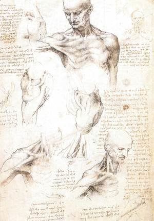 Leonardo Da Vinci - Anatomical studies of a male shoulder