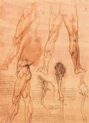 Leonardo Da Vinci - Studies of legs of man and the leg of a horse