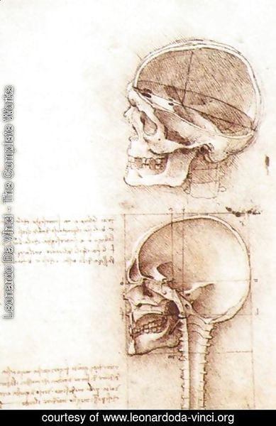 Leonardo Da Vinci The Complete Works Studies Of Human Skull