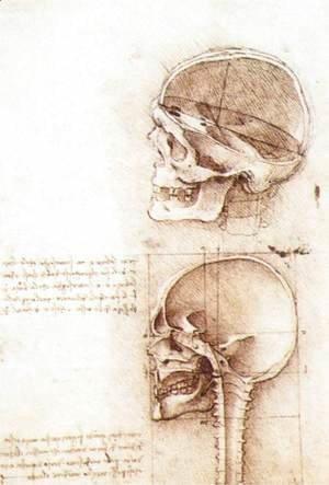 Leonardo Da Vinci - Studies of human skull