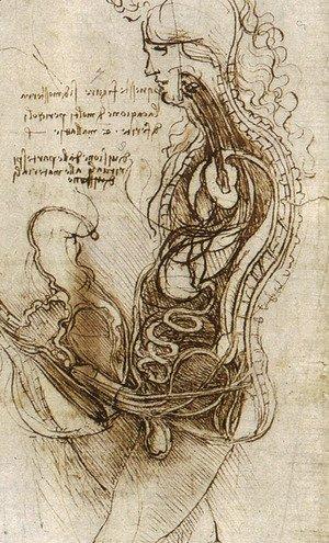 Leonardo Da Vinci - Dessin Coition