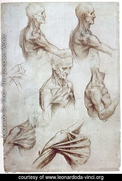 Leonardo Da Vinci - Muscles of the neck and shoulders 1515