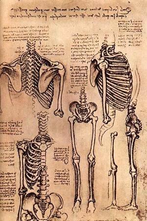 Leonardo Da Vinci - skeletons