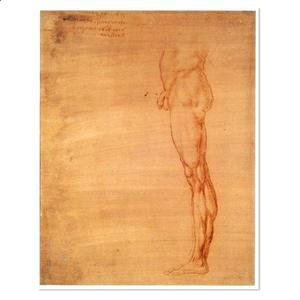 Leonardo Da Vinci - The Abdomen and Leg of a Man