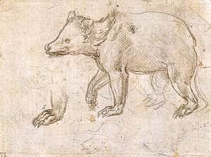 Leonardo Da Vinci - Studies of a Bear Walking