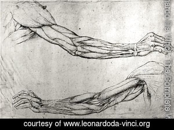 Leonardo Da Vinci - The Complete Works - Study of arms ...