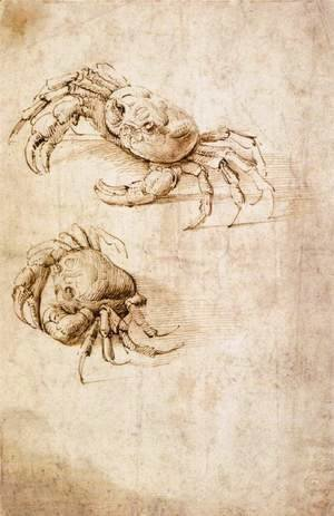Leonardo Da Vinci - Studies of crabs