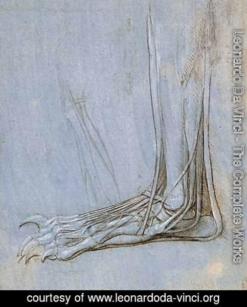 Leonardo Da Vinci - The anatomy of a foot