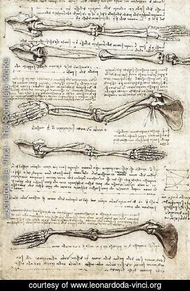 Leonardo Da Vinci - Studies of the Arm showing the Movements made by the Biceps