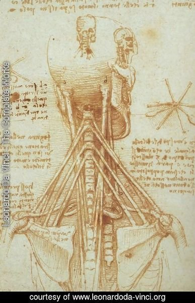 Leonardo Da Vinci - The Complete Works - Anatomy of the Neck ...