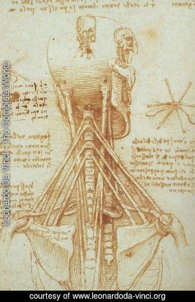 Leonardo Da Vinci The Complete Works Anatomy Of The Neck