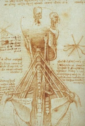 Leonardo Da Vinci - Anatomy of the Neck