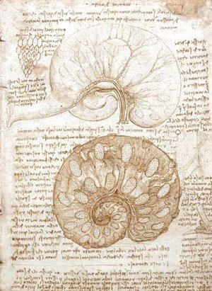 Leonardo Da Vinci - Drawing of the uterus of a pregnant cow
