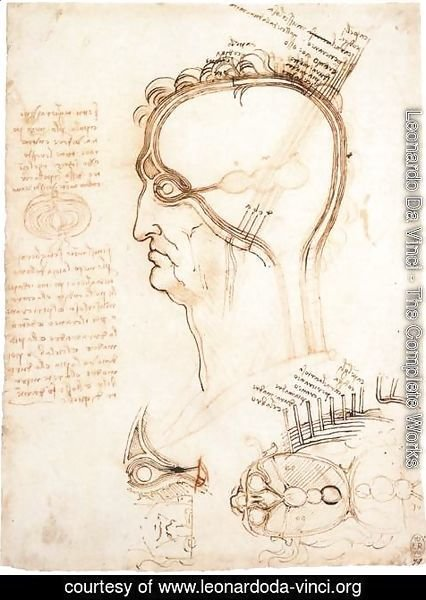 Leonardo Da Vinci - Comparison Of Scalp Skin And Onion
