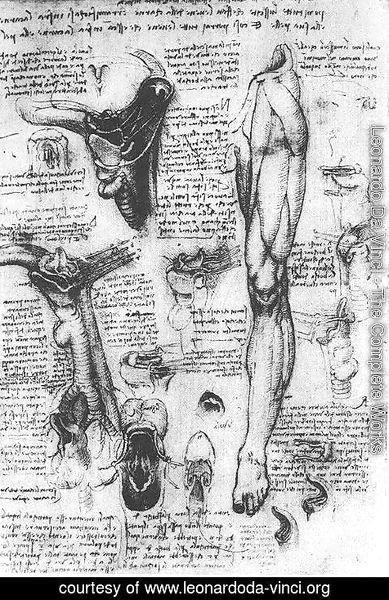 Leonardo Da Vinci The Complete Works Anatomical Studies Larynx