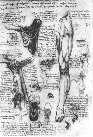Leonardo Da Vinci - Anatomical Studies   Larynx And Leg