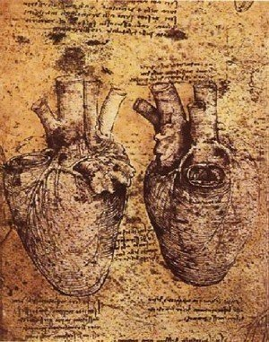Leonardo Da Vinci - Heart And Its Blood Vessels
