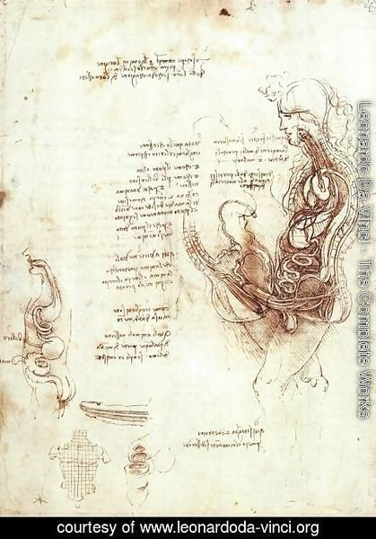 Leonardo Da Vinci - Studies Of The Sexual Act And Male Sexual Organ