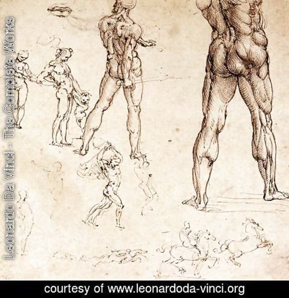 Leonardo Da Vinci - Anatomical Studies