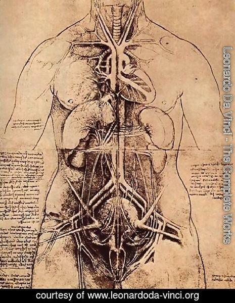 Leonardo Da Vinci - Drawing Of A Womans Torso