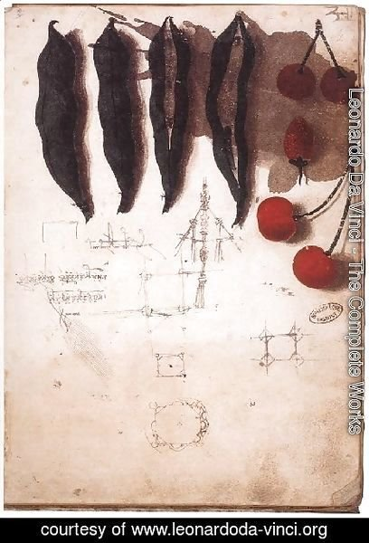 Leonardo Da Vinci - Fruit Vegetables And Other Studies