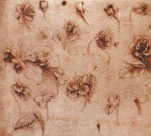 Leonardo Da Vinci - Flower Studies